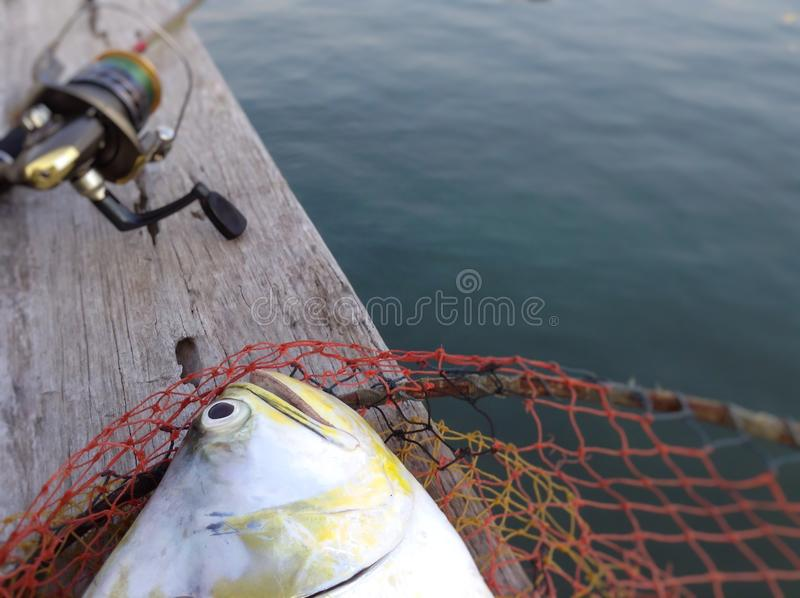 Fishing game. Catch of queenfish,fishing tackle and fish,water sports stock photo