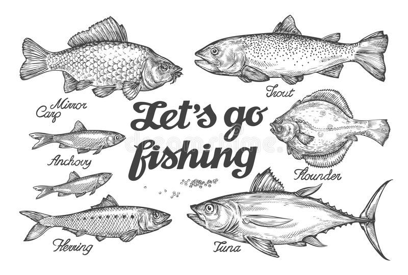 Fishing. Hand drawn vector fish. Sketch trout, carp, tuna, herring, flounder, anchovy. Fishing. Hand-drawn vector fish. Sketch trout, carp, tuna herring flounder stock illustration