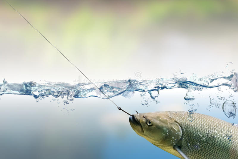 Fishing hook under water and trout fish royalty free stock image