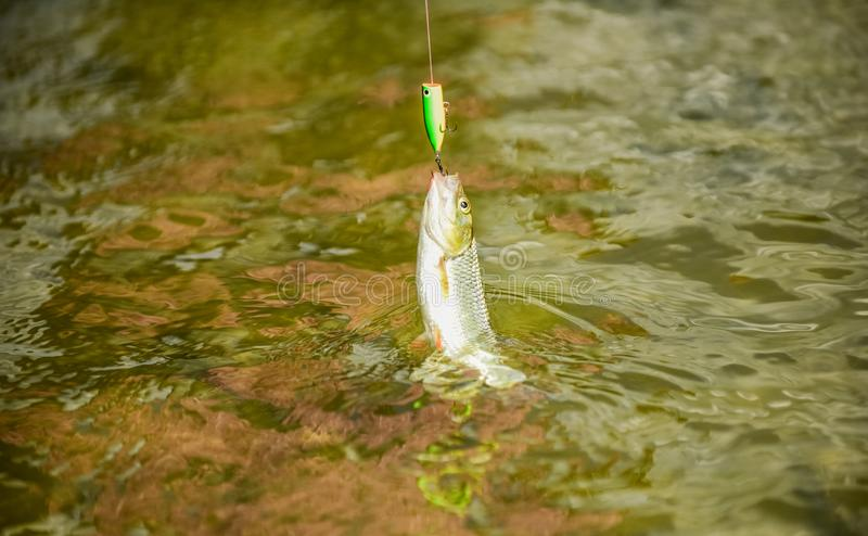 Fishing lake river freshwater. Transparent water. Hobby sport activity. Trout bait. Good catch. Fly fishing. Fish on. Hook. Catch me if you can. Fish hook bait stock images