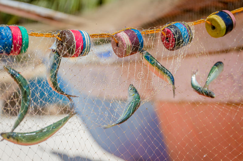 Fishing net with fish. On natural background royalty free stock image