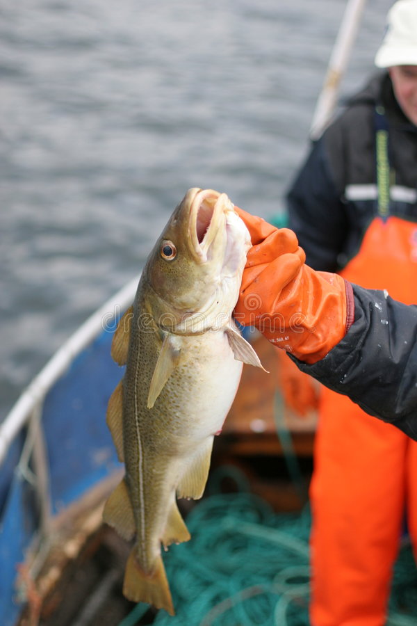 Fishing in Norway royalty free stock photos