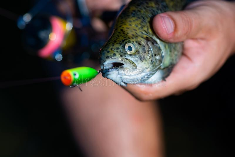 Fishing - relaxing and enjoying hobby. Fish head and fishing hook. Catches a fish. Fish trout on a hook. Trout. Fishing. stock photos