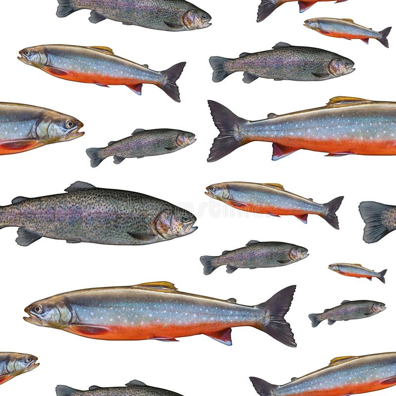 Fishing seamless pattern of fish. Background from trout salmon and arctic char fish isolated on white royalty free stock image