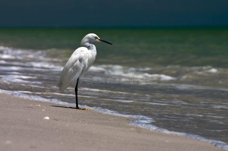 Download Fishing Shore Bird stock photo. Image of hunting, florida - 1146268