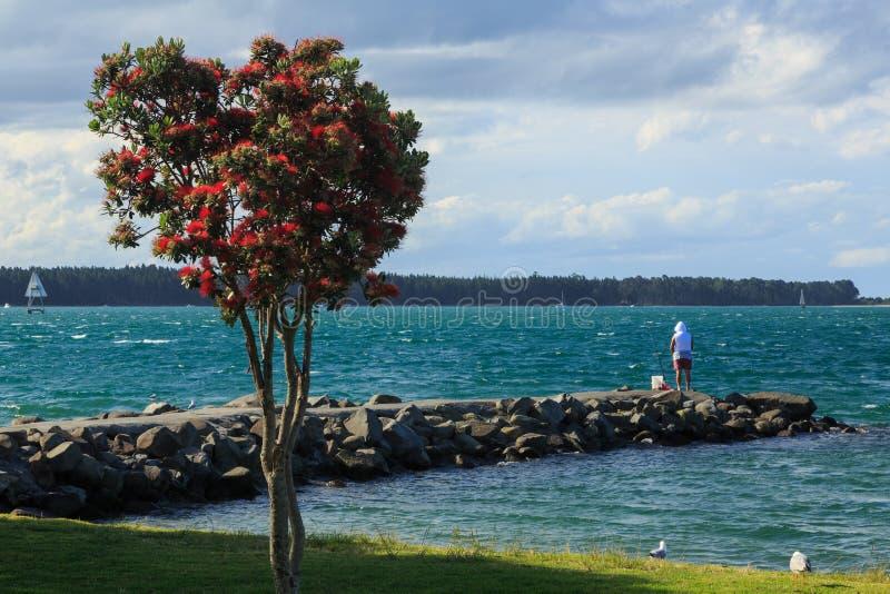 Fishing from stone pier, Tauranga, New Zealand stock image