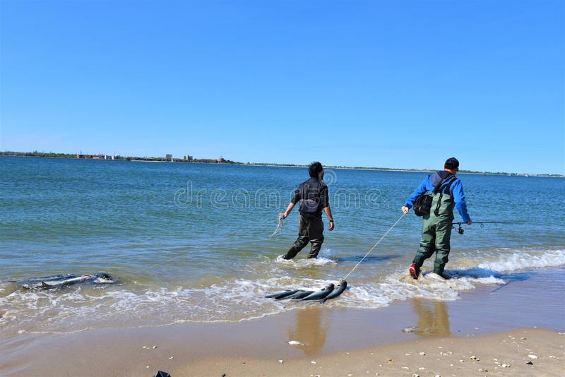 Fishing summer season in new york city area. For anglers of New York city , which located right nearby of Atlantic ocean ,saltwater fishing one of the best time royalty free stock images