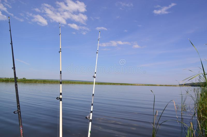 Fishing in the pond. royalty free stock images
