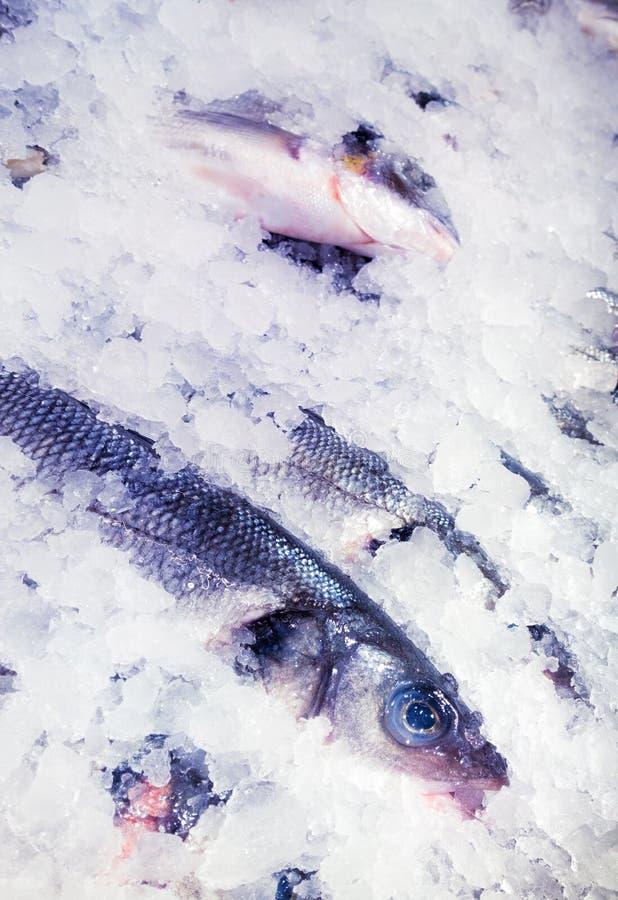 Fishmarket fotografia de stock