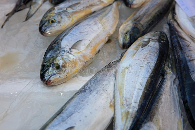 Fishmarket in Catania royalty free stock image