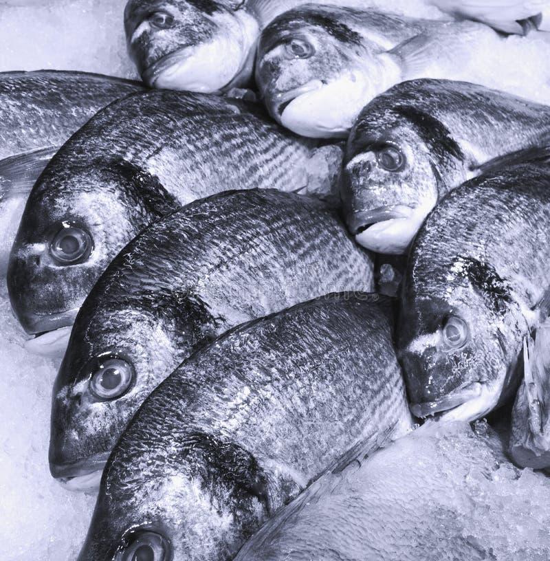 Fishmarket fotografía de archivo