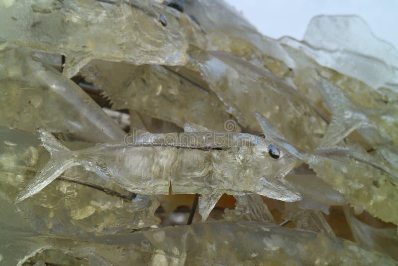 Fishmodel стоковое фото rf