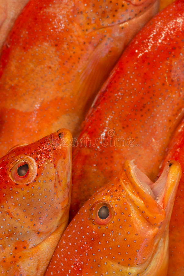 Fishmongers επιδεικνύουν την κινηματογράφηση σε πρώτο πλάνο στοκ φωτογραφία με δικαίωμα ελεύθερης χρήσης