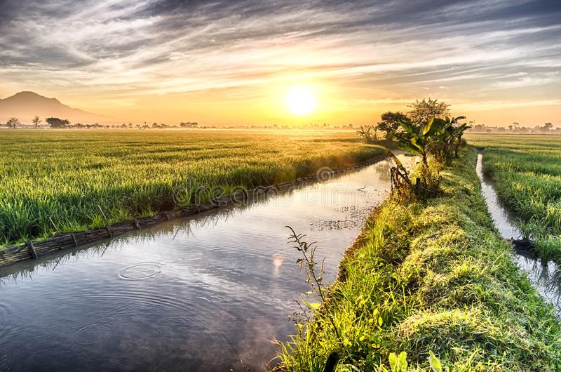 Fishpond followed by very vast, broad, extensive, spacious rice field. Streched into the horizon. Behind it is a line of hills and mountains that also royalty free stock photography