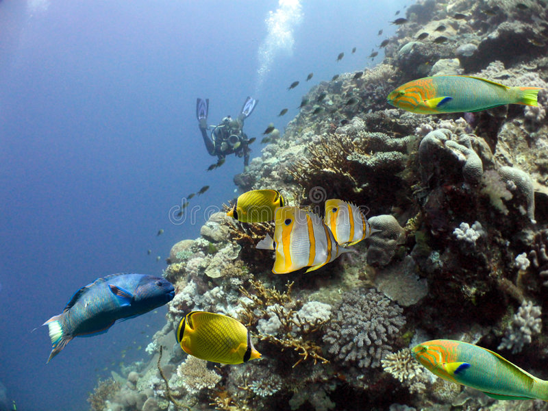 Download Fishreef Royalty Free Stock Image - Image: 7486306