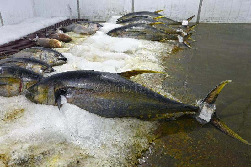 Fishs 图库摄影