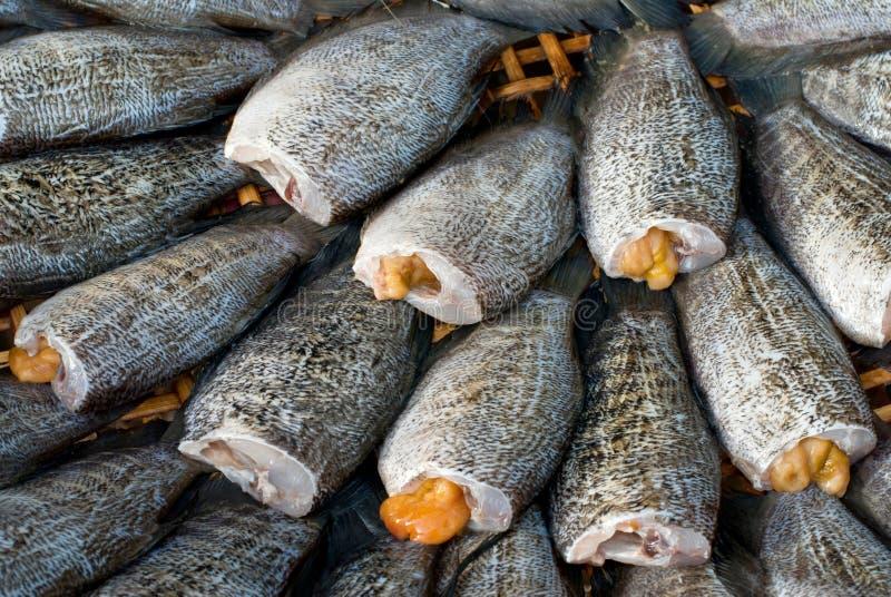 Fishs de sequía del Osphromemus gorami del snakeskin imagenes de archivo