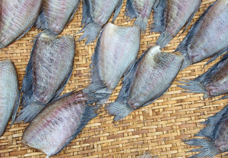Fishs de sequía del Osphromemus gorami del snakeskin fotografía de archivo