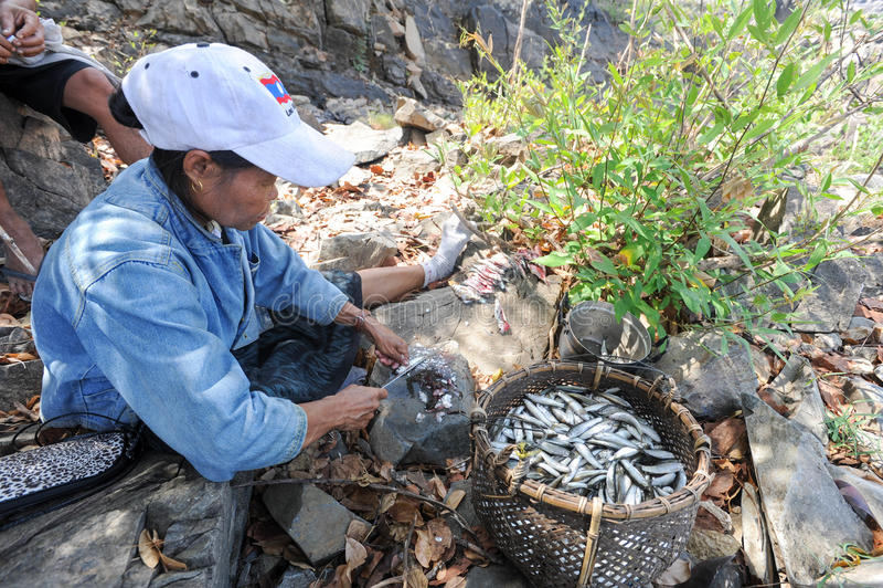Fishs di pulizia della donna all'isola di Don Khon sul Laos immagine stock