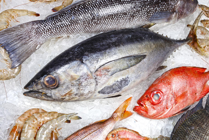 Fishs e gamberetto fotografia stock libera da diritti
