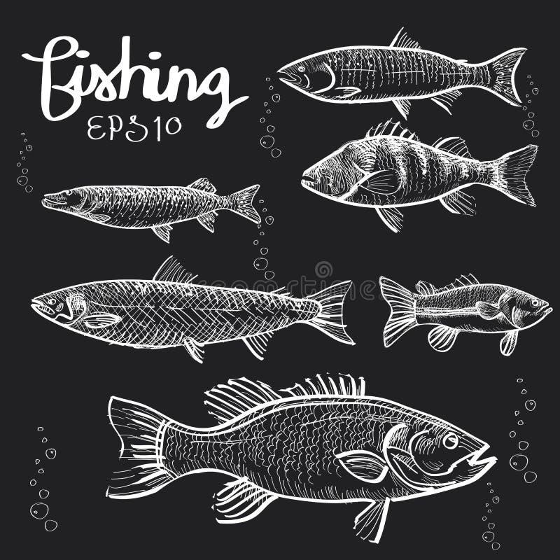 Fishs handdraw na blackboard zdjęcia royalty free