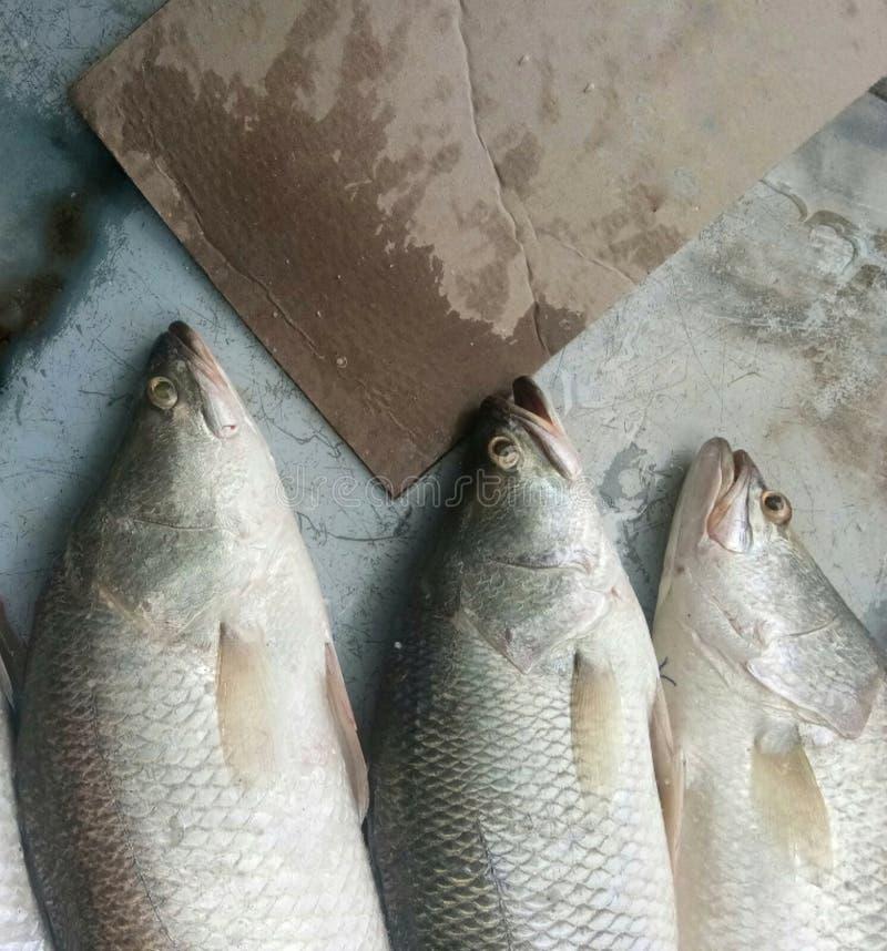 Fishs op markt stock afbeelding
