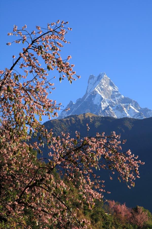 Fishtail&Himalaya Mountains.Nepal fotografia stock