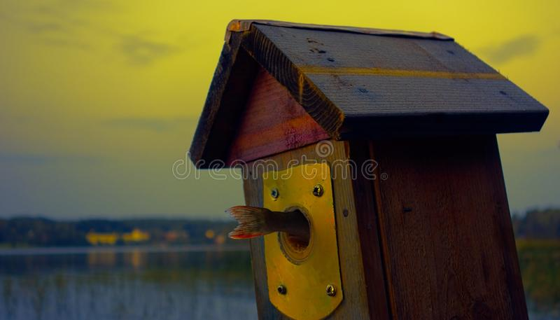 Birdhouse by the lake with fish stock photo