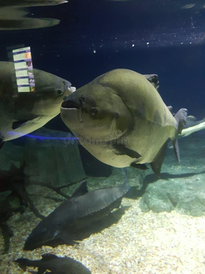fishy fotografie stock libere da diritti