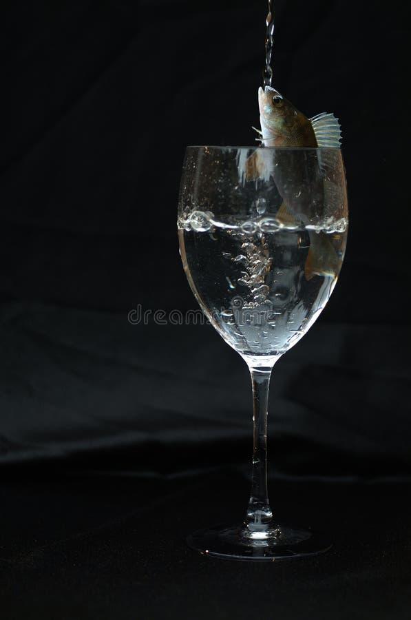 Fishy stock photos