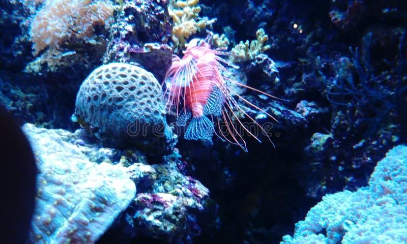 fishy immagini stock libere da diritti