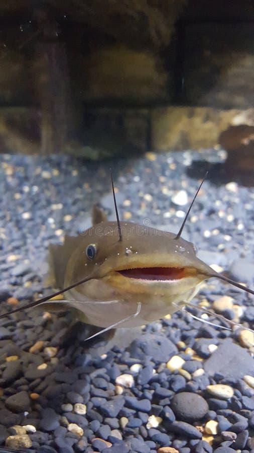 Fishy stock image