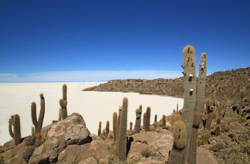Fiskö i Uyuni salta lägenheter, Bolivia royaltyfria foton