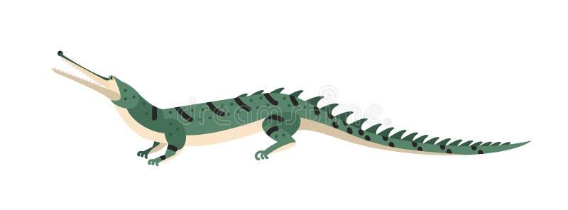 Fisk-äta krokodilen eller gharial som isoleras på vit bakgrund Farlig exotisk rov- reptil Löst köttätande royaltyfri illustrationer