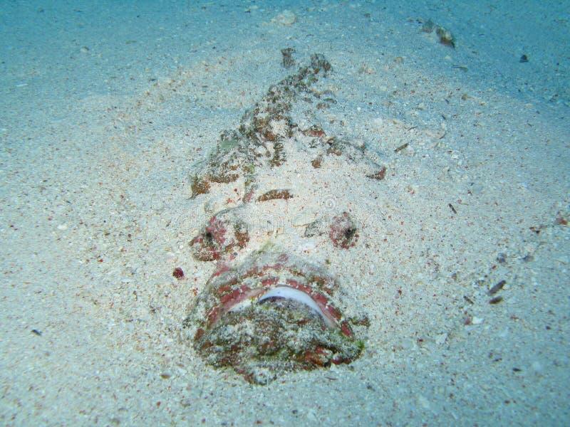 fisk 104 fotografering för bildbyråer
