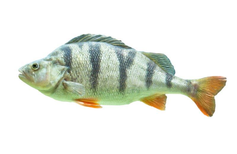 Download Fisk arkivfoto. Bild av fisk, flotta, isolerat, sida - 19798596