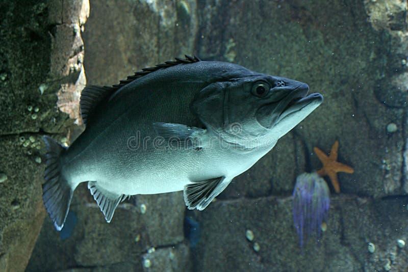 Download Fisk arkivfoto. Bild av portugal, flotta, lisbon, fisk - 232500