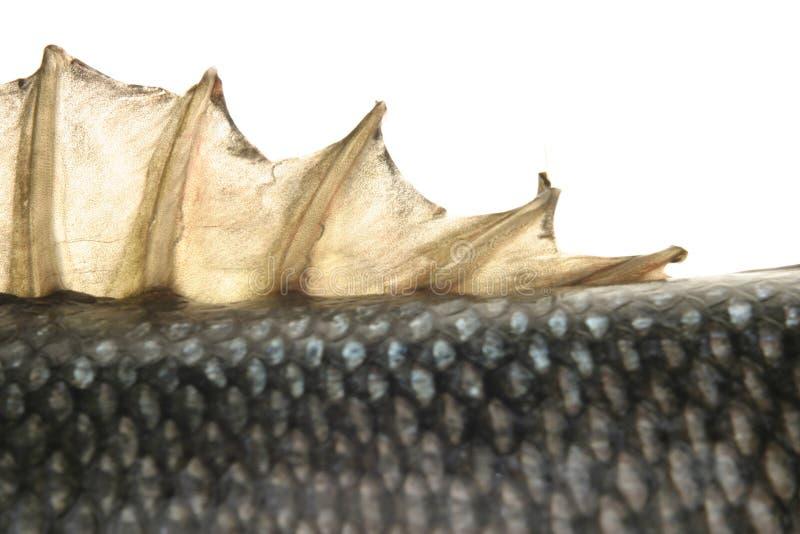 Download Fisk fotografering för bildbyråer. Bild av sjö, fiske, mål - 241659