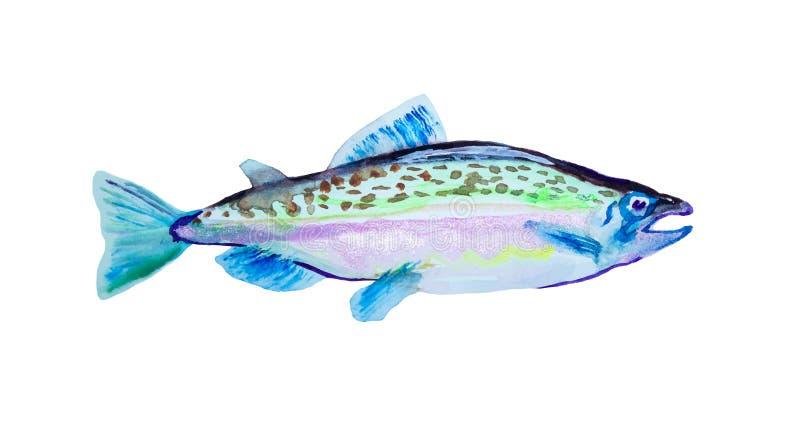 Fisk för lax för vattenfärgmålning rosa Atlantisk puckelrygg, vektorillustration med detaljer och optimerade fläckar som ska anvä royaltyfri fotografi