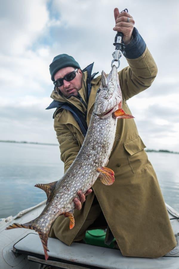 Fisk för pik för amatörmässiga sportfiskarehåll stor royaltyfri fotografi
