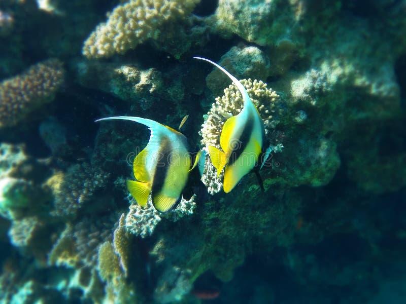 Fisk-fjäril royaltyfri fotografi