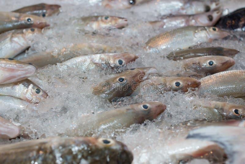 fisk fryst is arkivbild