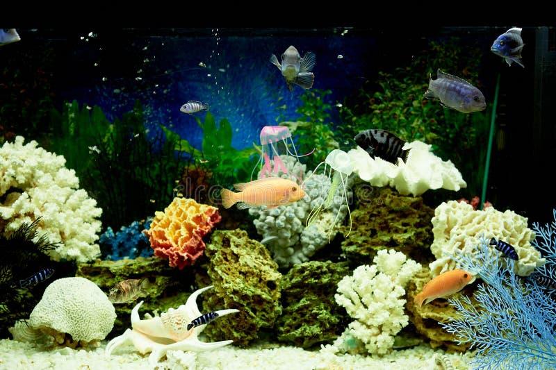 Fisk i akvariet, blått vatten Drömmar av havet utgångspunkten kopplar av arkivfoto
