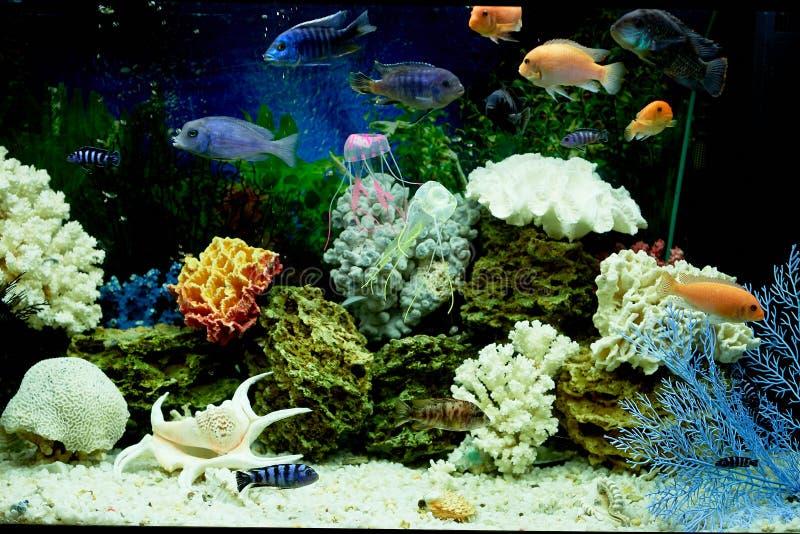 Fisk i akvariet, blått vatten Drömmar av havet utgångspunkten kopplar av arkivfoton