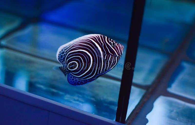 Fisk i den marin- behållaren arkivfoton