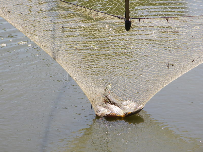 Fisk i fyrkantigt netto för dopp arkivbild