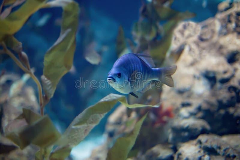 Fisk i havet royaltyfri foto