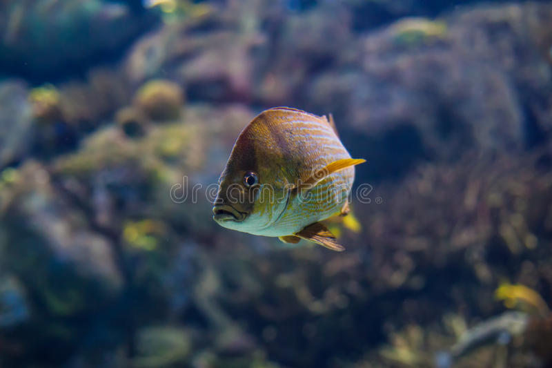 Fisk i havet arkivbild