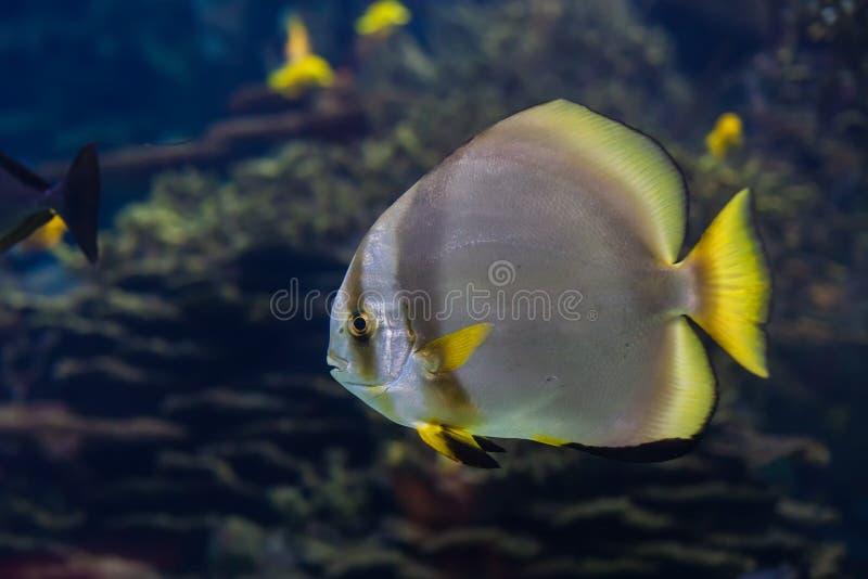 Fisk i havet arkivbilder