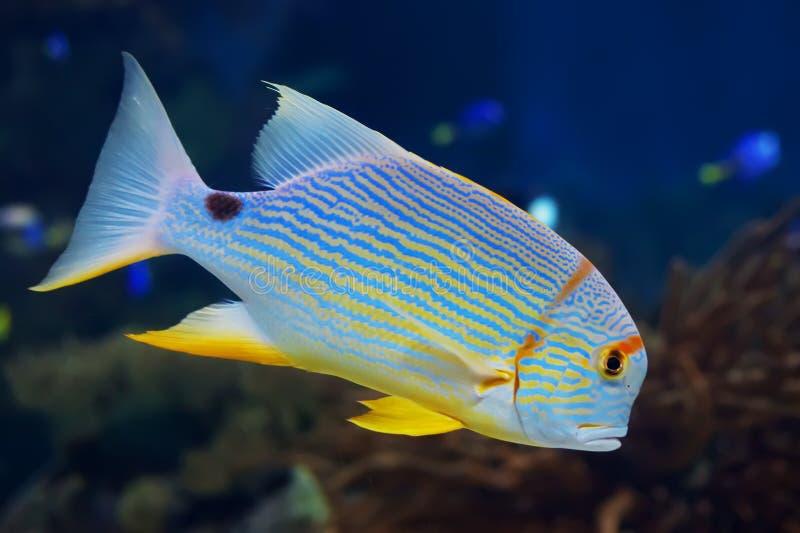Fisk i havet royaltyfria bilder